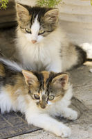 Two small Greek cats