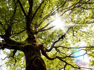 Dream scape,fantasy tree and sunbeam
