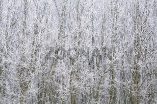 background of tree branches covered with frost
