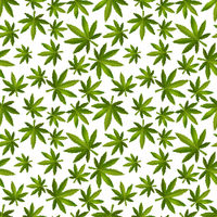 Green realistic marijuana leafs, medical cannabis detailed icons on the white background, seamless pattern
