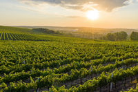 Beautiful sunset over green hills with cultivated vines, Cricova, Moldova
