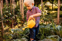 The baby boy waters the cabbage uses a watering can