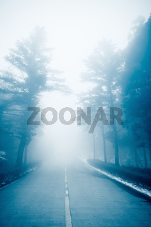 highway in the fog