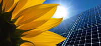 Solar modules and sunflower in front of a sunny sky