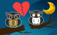Owls after an argument at night