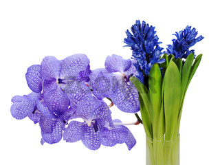 colorful bouquet from hyacinth and orchidea arrangement centerpiece isolated on white background