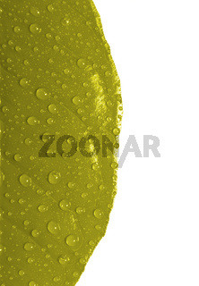 Yellow leaf with drops of water isolated
