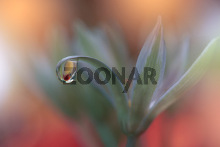 Beautiful Nature Background.Creative Artistic Wallpaper.Abstract Macro Photography.