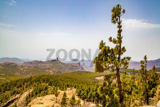Landscape of Gran Canaria