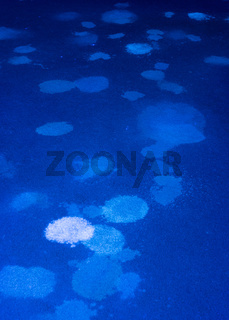 Ultraviolet light illuminates many pet urine stains on a carpet