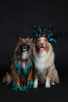 Two dogs with feather headdress indians