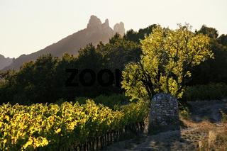 Weinlandschaft, Dentelles de Montmirail, Provence, France