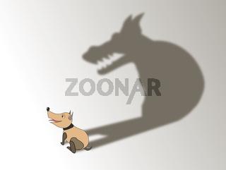a dog's shadow