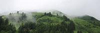 Fog creeping along green mountain meadows. Mystic scene in the Bernese Oberland.