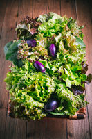 Assortment of freshly picked lettuce for salad and small aubergines (eggplants) in trug on wooden background