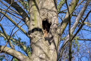 Baum mit Hohlraum