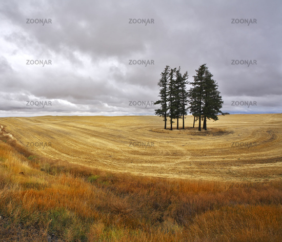 The trees in fields