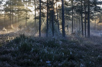 The first rays of the morning sun fight their way through the fog in a forest
