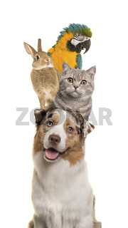 Portrait of a dog, cat, rabbit and a parrot stacked vertically isolated on a white background