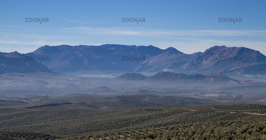 Panorama of Sierra Cazorla with Olive trees