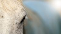 Close up of horse eye on farm with text free space