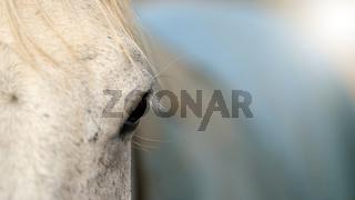 Nahaufnahme des Auges eines Pferdes
