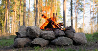 Burning Campfire in the forest