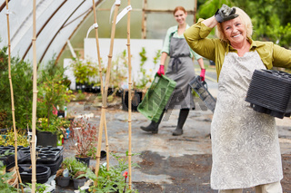 Ältere Frau als Gärtnerin bei der Arbeit im Gartencenter