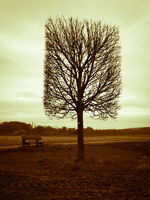 Lonely Tree Square