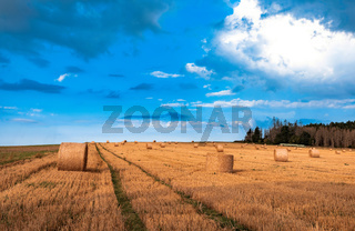 Straw bales stacked in a field at summer time