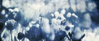 tulpen blumen blau gefärbt konzept karte