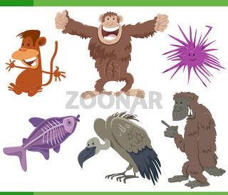 funny cartoon wild animals species characters set
