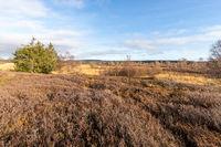 Landscape in the High Fens in Belgium