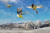 Native bird species in the air while flying