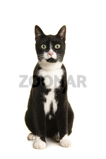 Black and white sitting european shorthair cat looking at the camera isolated on a white background seen from the front