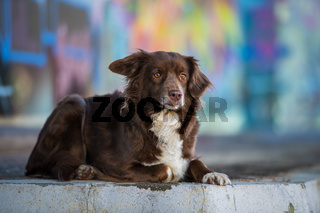 Cute dog with graffiti in the background