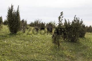 Landschaft am Bühlchen
