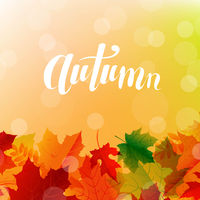 Autumn Postcard With Bright Leaves