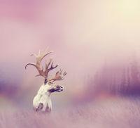 Large  deer buck with big horns