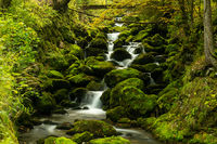 Many moss-covered boulders and small mountain creek in lush green forest