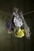 different bouquets of herbs hanging in front of green wooden wall