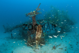 Deep Pete Wrack, Papua Neuguinea