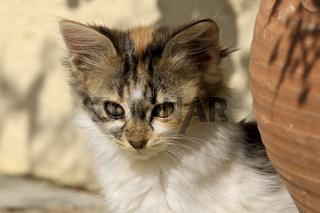 Portrait eines Katzenkindes