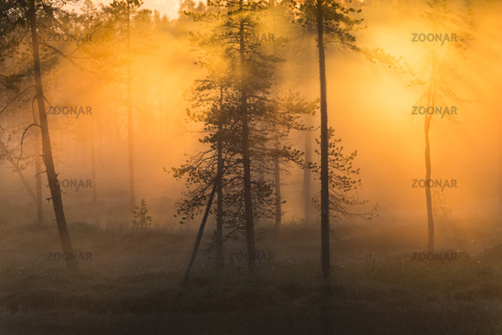 foggy mood, Stubba nature reserve, Sweden