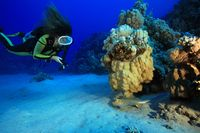 Scuba diver and bluespotted stingray