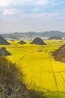 The amazing yellow canola field in Yunnan province in China