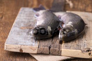 zwei rohe Saiblinge auf rustikalem Holz