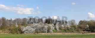 Panorama einer Frühlingslandschaft am Tegeler Fließ im Norden von Berlin