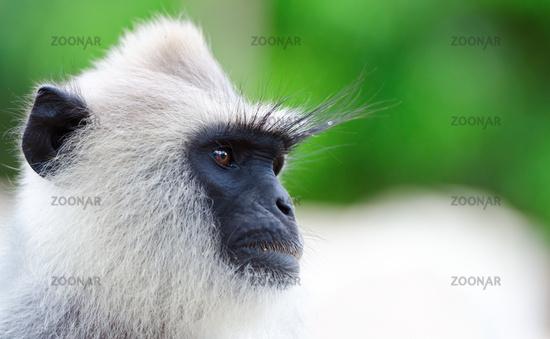 Portrait of wild monkey