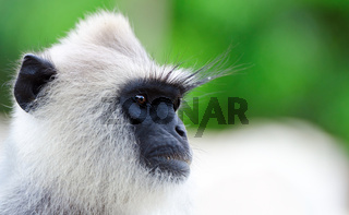 Portrait of wild monkey